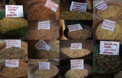 Photo of چالش های جهانی تولید برنج